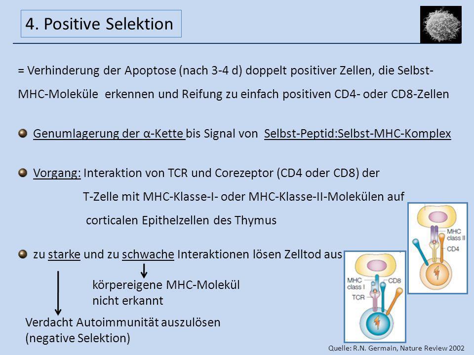 4. Positive Selektion