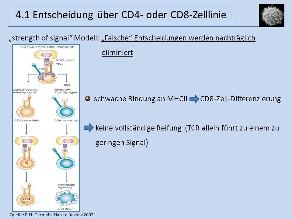 4.1 Entscheidung über CD4- oder CD8-Zelllinie