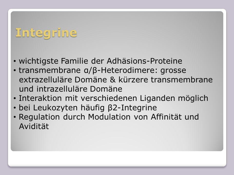 Integrine wichtigste Familie der Adhäsions-Proteine