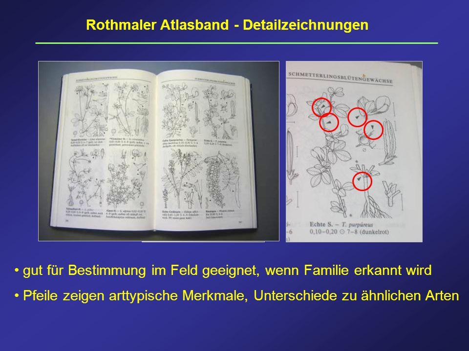 Rothmaler Atlasband - Detailzeichnungen