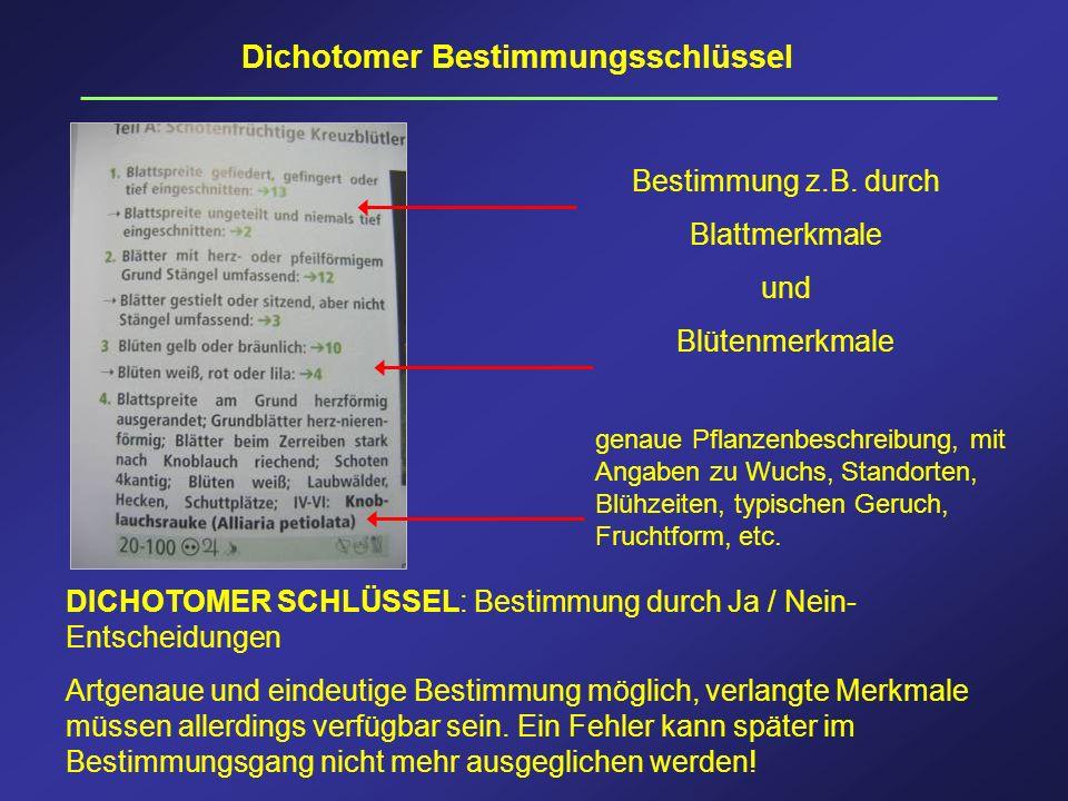 Dichotomer Bestimmungsschlüssel