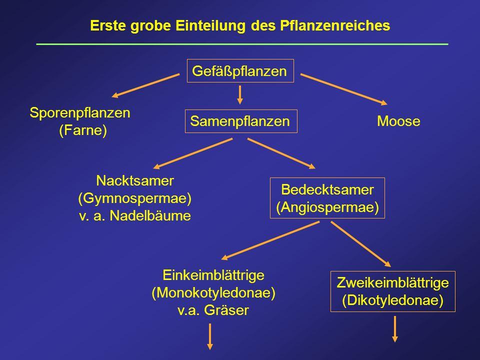 Erste grobe Einteilung des Pflanzenreiches