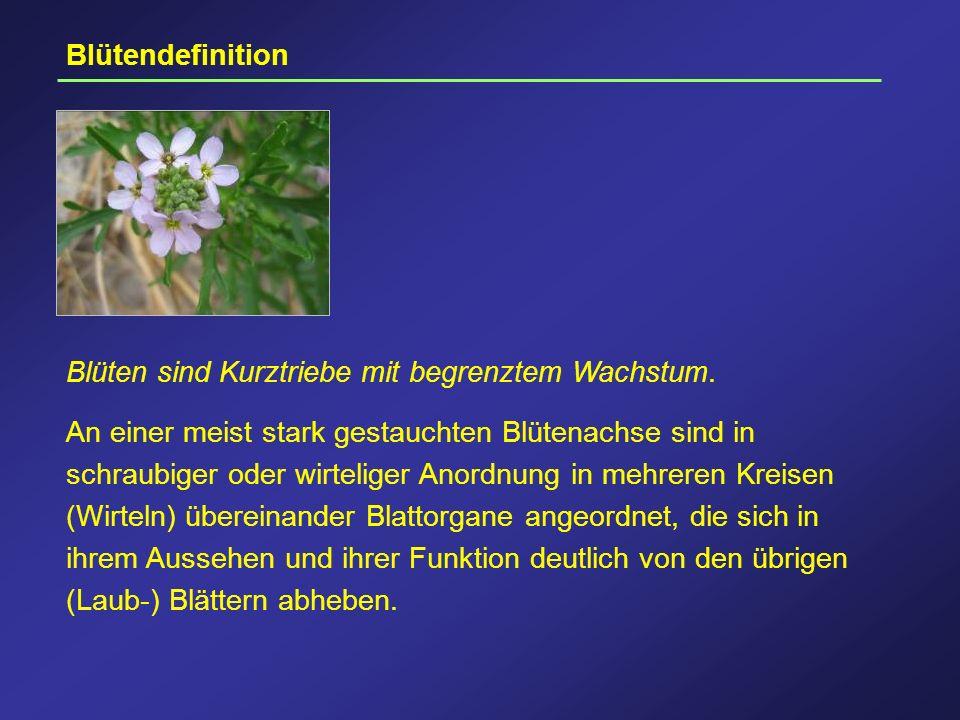 Blütendefinition Blüten sind Kurztriebe mit begrenztem Wachstum.