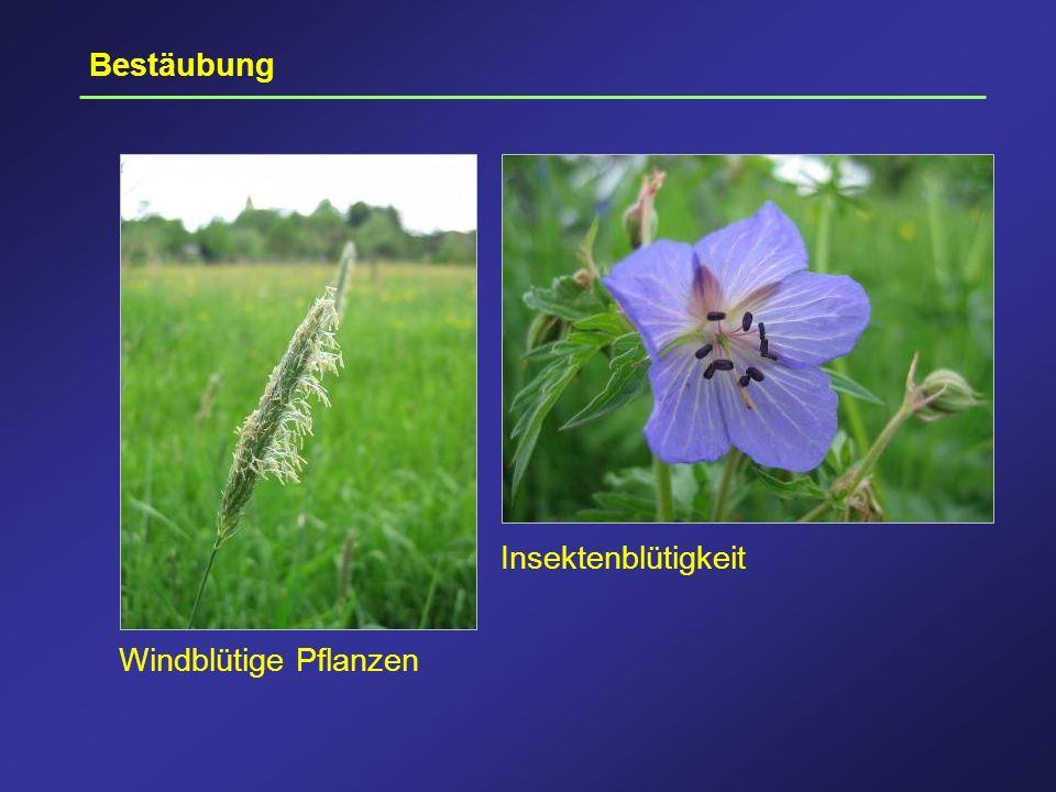 Bestäubung Insektenblütigkeit Windblütige Pflanzen
