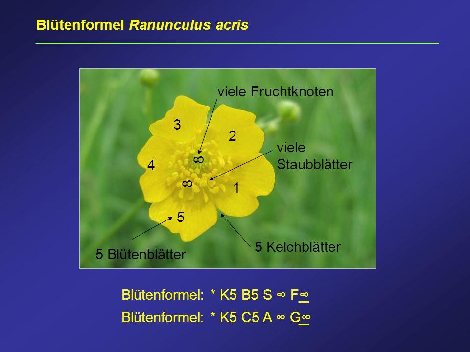 Blütenformel Ranunculus acris