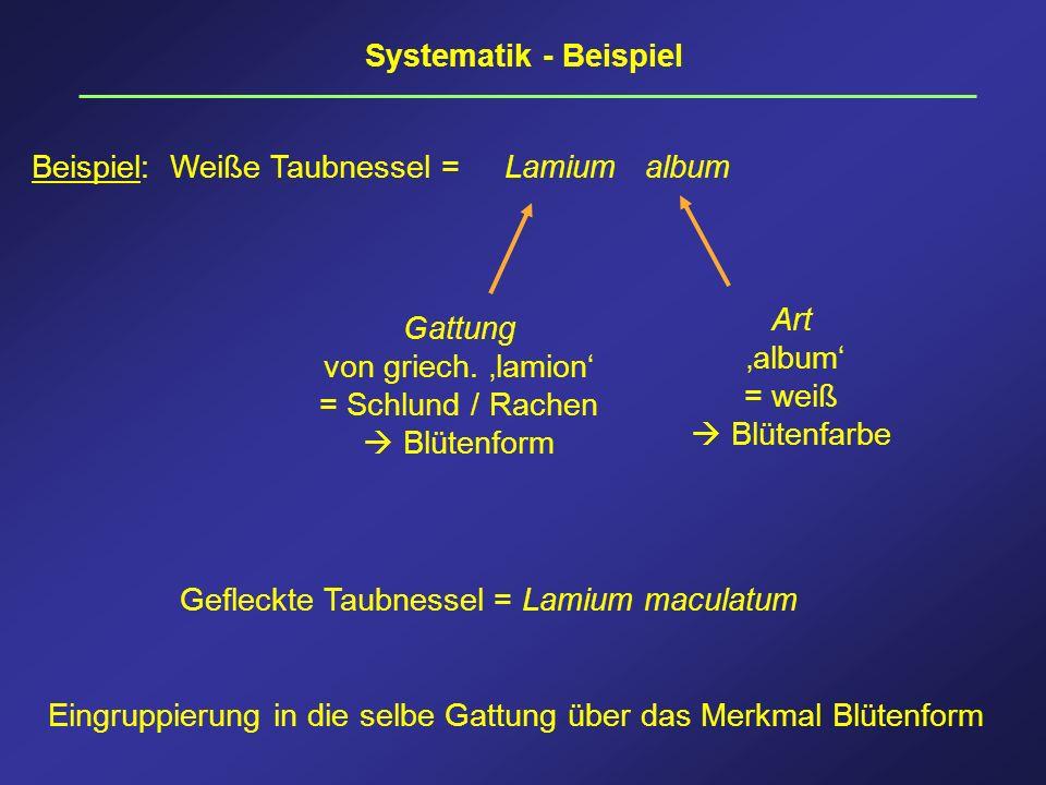 Systematik - BeispielBeispiel: Weiße Taubnessel = Lamium album. Art. 'album' = weiß.  Blütenfarbe.