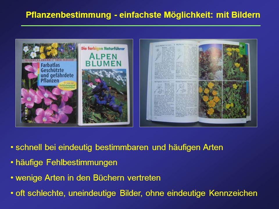 Pflanzenbestimmung - einfachste Möglichkeit: mit Bildern