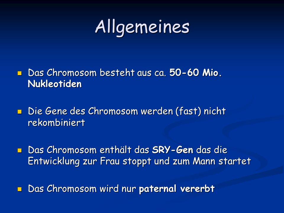 Allgemeines Das Chromosom besteht aus ca. 50-60 Mio. Nukleotiden