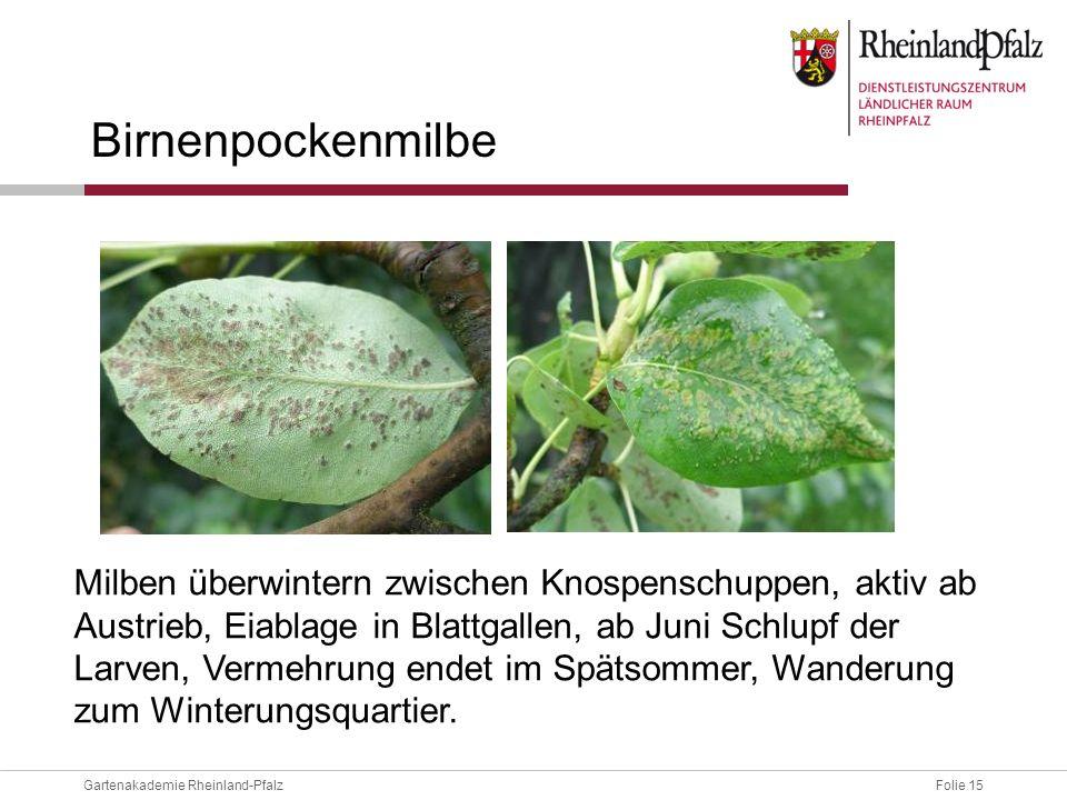 Birnenpockenmilbe