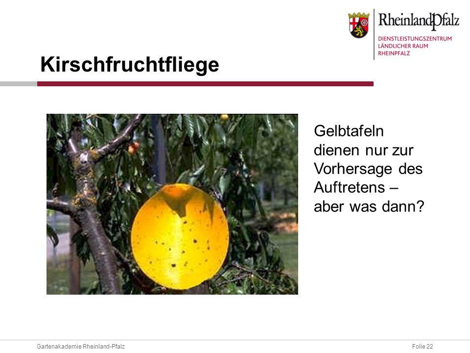 Kirschfruchtfliege Gelbtafeln dienen nur zur Vorhersage des Auftretens – aber was dann