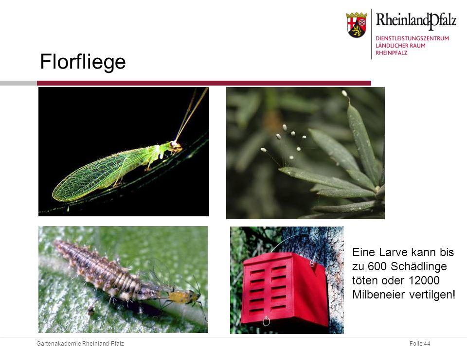Florfliege Eine Larve kann bis zu 600 Schädlinge töten oder 12000 Milbeneier vertilgen!