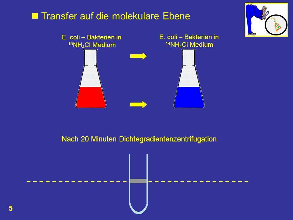  Transfer auf die molekulare Ebene