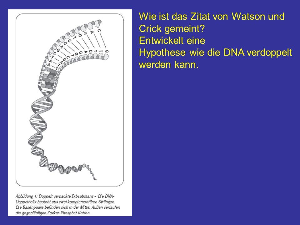 Wie ist das Zitat von Watson und Crick gemeint