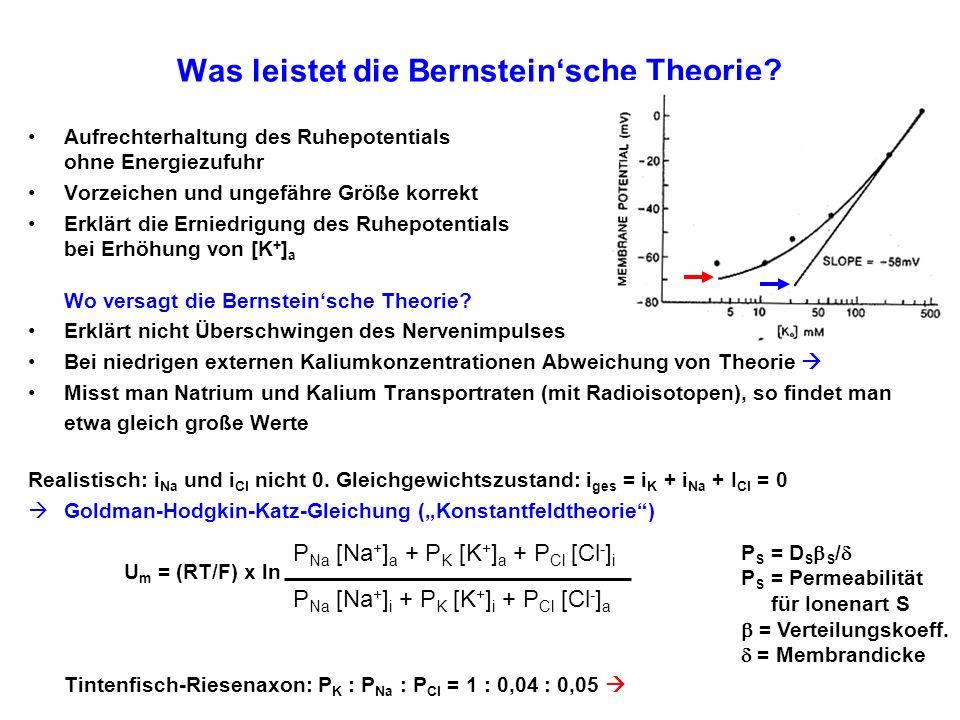 Was leistet die Bernstein'sche Theorie