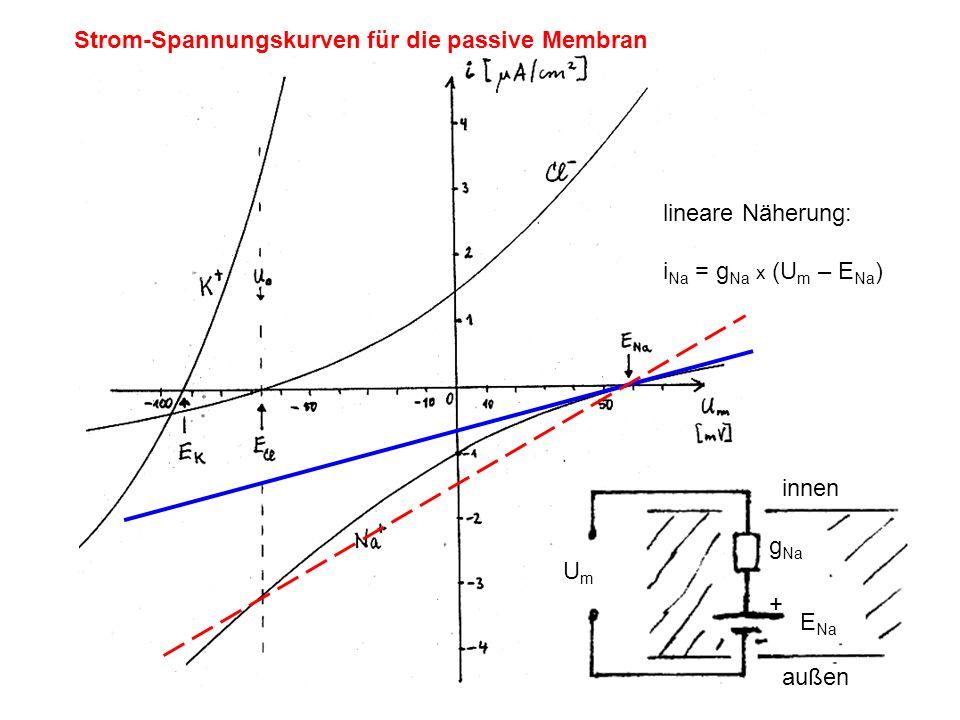 Strom-Spannungskurven für die passive Membran