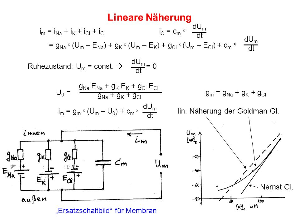 Lineare Näherung dUm im = iNa + iK + iCl + iC iC = cm x dt dUm dt