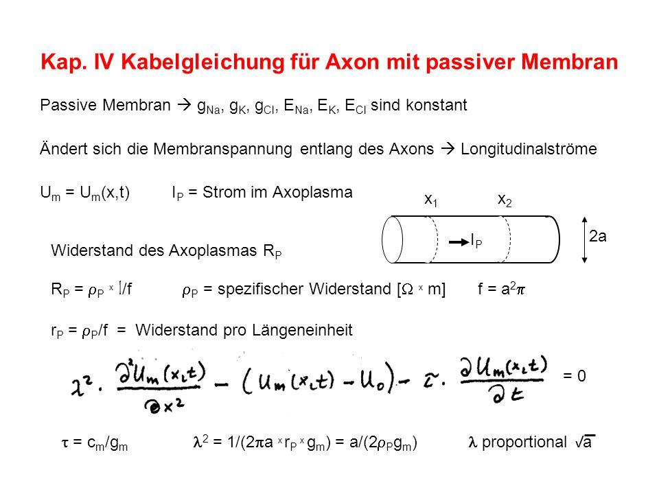 Kap. IV Kabelgleichung für Axon mit passiver Membran