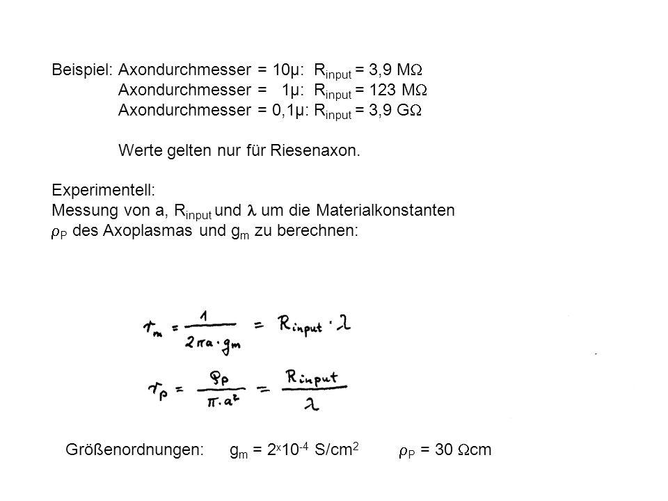 Beispiel: Axondurchmesser = 10µ: Rinput = 3,9 MW