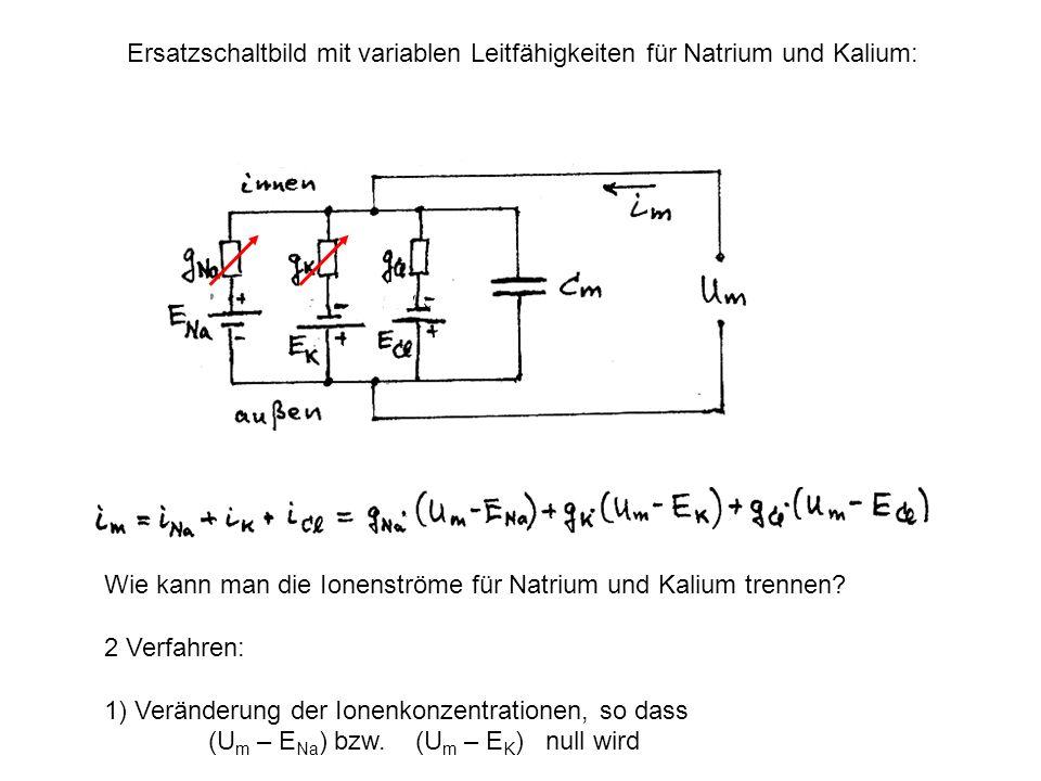 Ersatzschaltbild mit variablen Leitfähigkeiten für Natrium und Kalium: