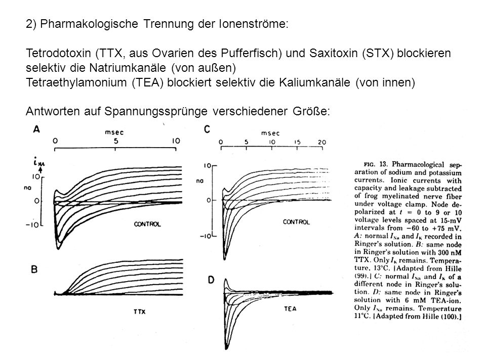 2) Pharmakologische Trennung der Ionenströme: