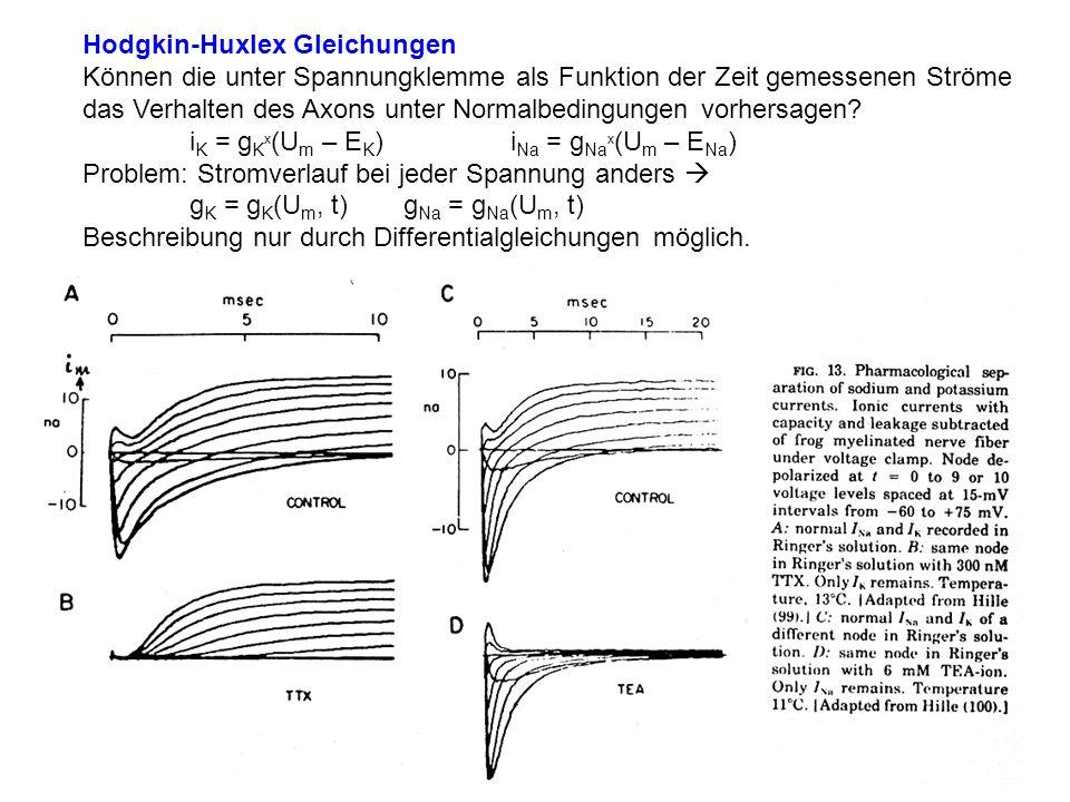 Hodgkin-Huxlex Gleichungen