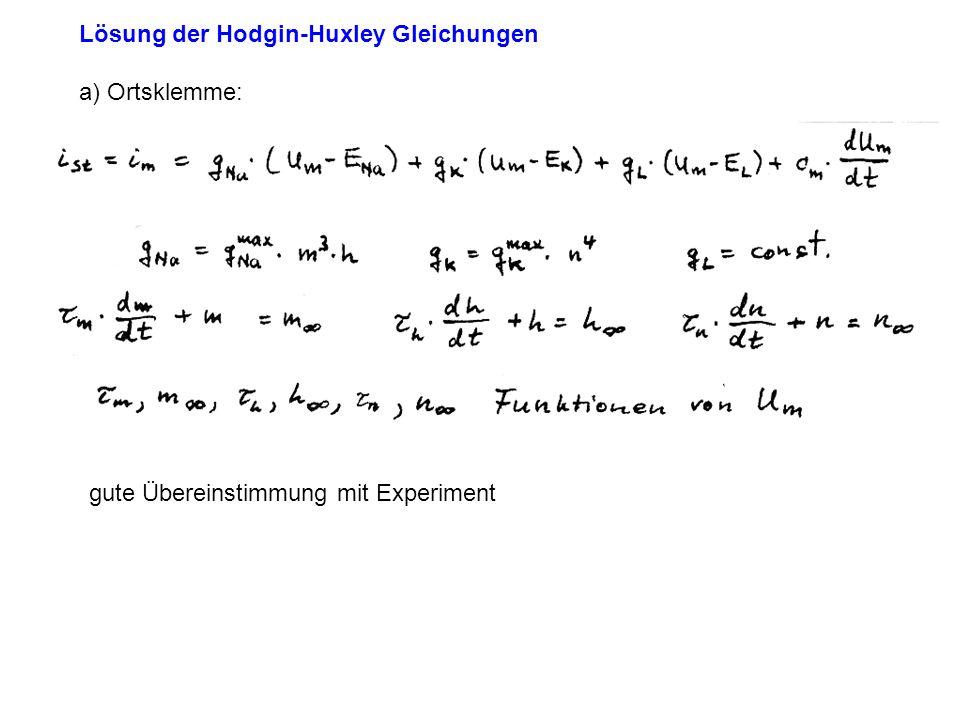 Lösung der Hodgin-Huxley Gleichungen