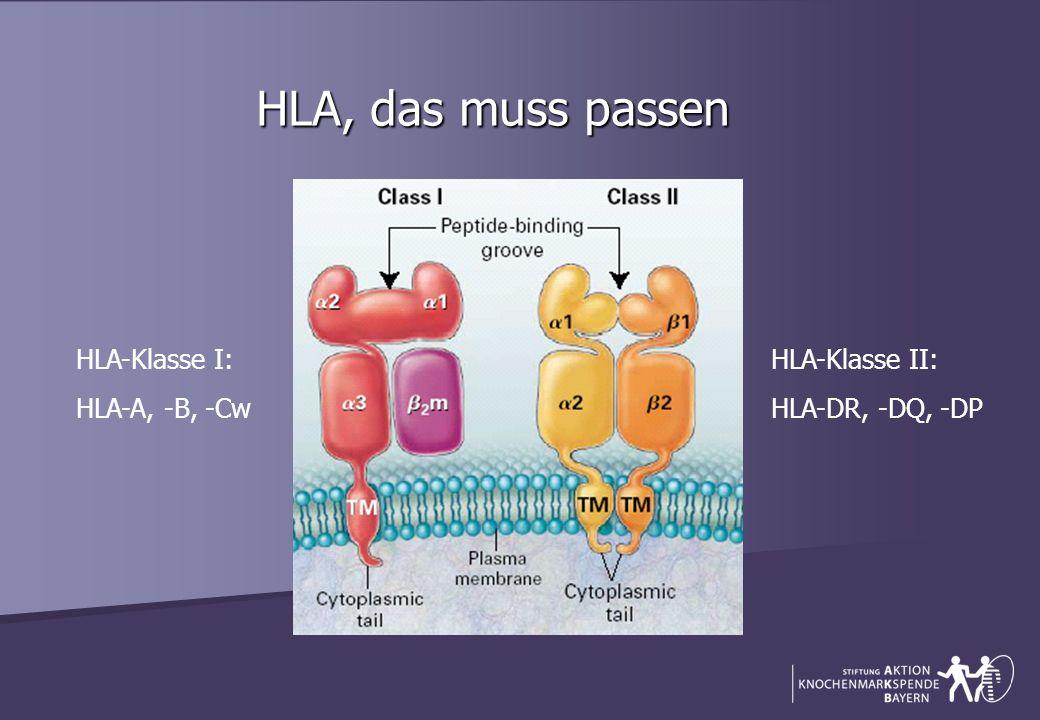 HLA, das muss passen HLA-Klasse I: HLA-A, -B, -Cw HLA-Klasse II: