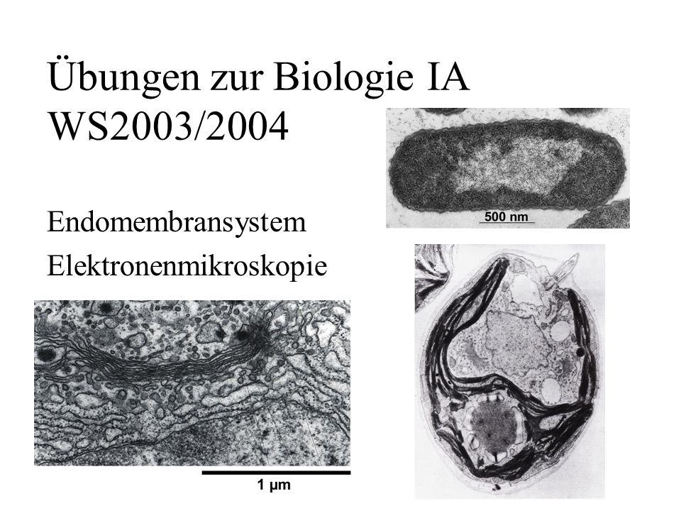 Übungen zur Biologie IA WS2003/2004