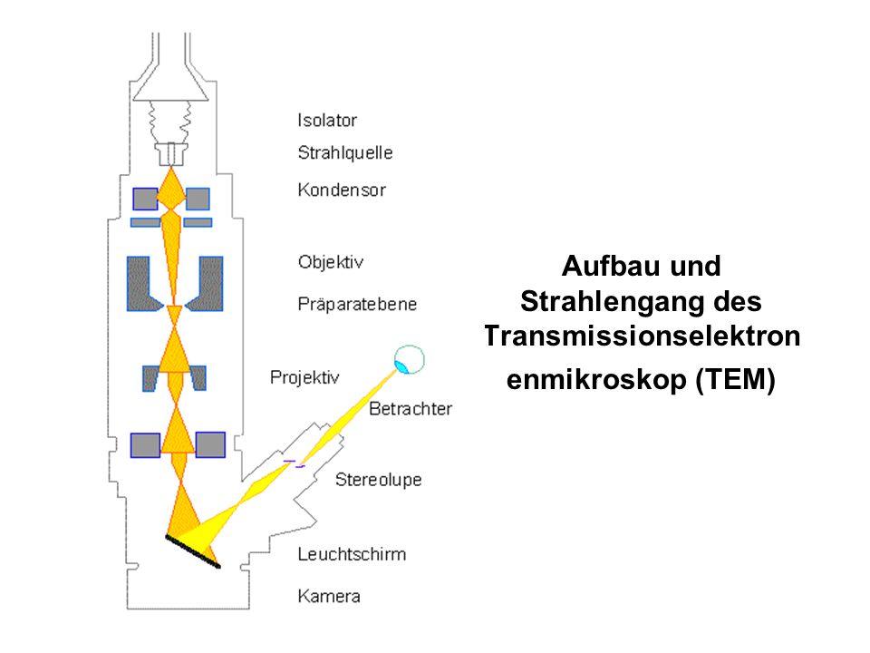 Aufbau und Strahlengang des Transmissionselektronenmikroskop (TEM)