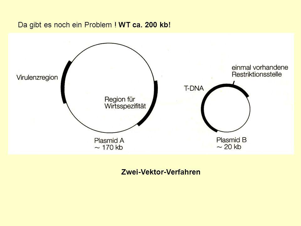 Da gibt es noch ein Problem ! WT ca. 200 kb!