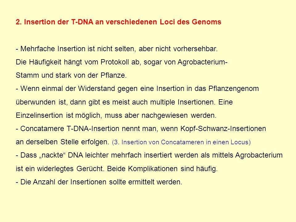 2. Insertion der T-DNA an verschiedenen Loci des Genoms