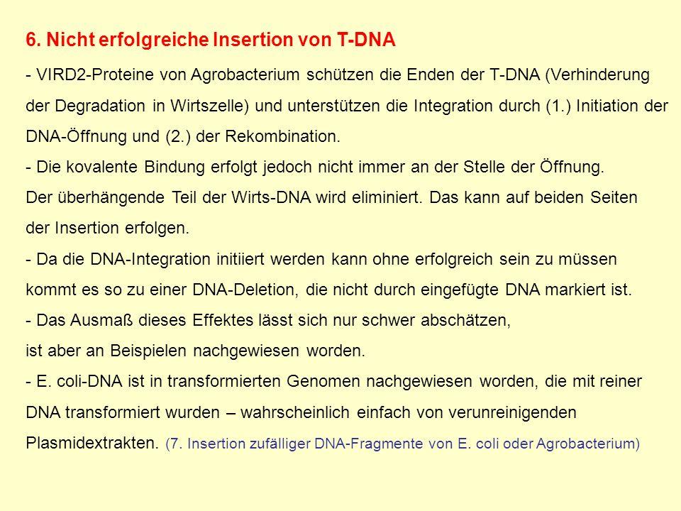 6. Nicht erfolgreiche Insertion von T-DNA