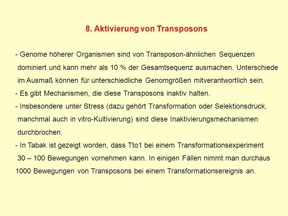 8. Aktivierung von Transposons