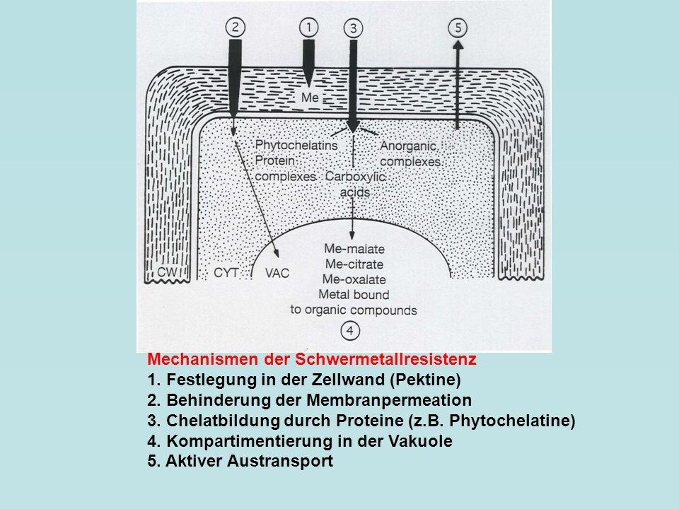 Mechanismen der Schwermetallresistenz