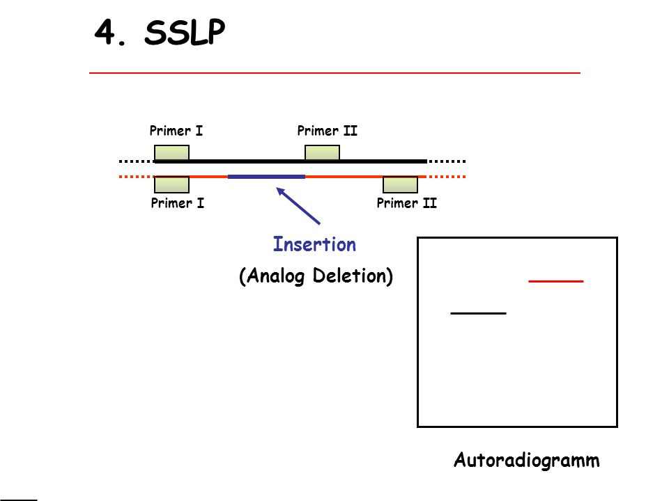 4. SSLP Insertion (Analog Deletion) Autoradiogramm Primer I Primer II
