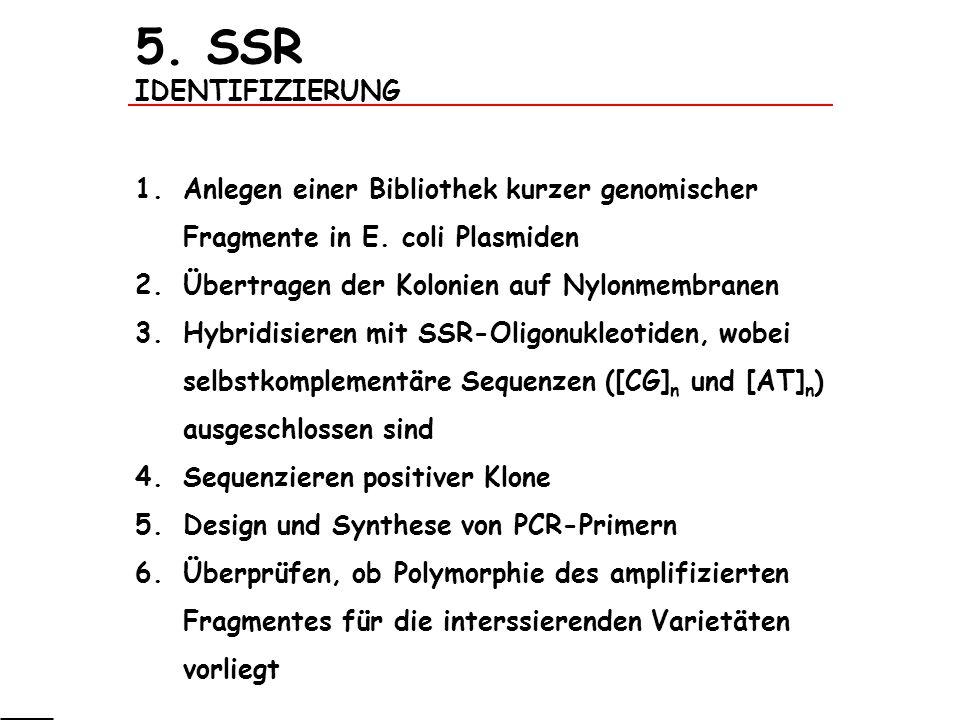 5. SSR IDENTIFIZIERUNG Anlegen einer Bibliothek kurzer genomischer Fragmente in E. coli Plasmiden. Übertragen der Kolonien auf Nylonmembranen.