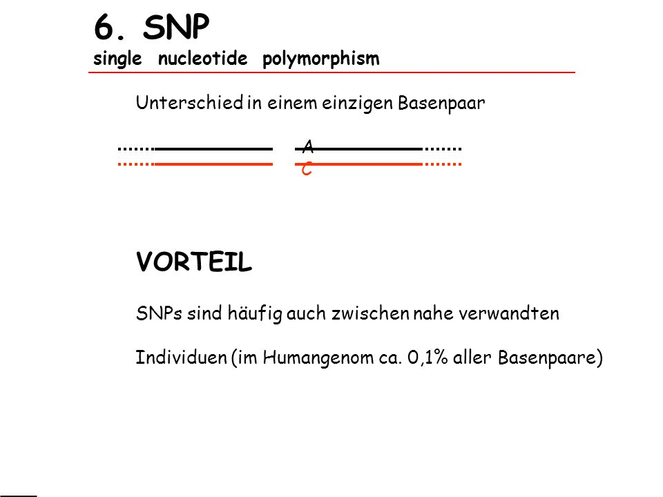 6. SNP single nucleotide polymorphism