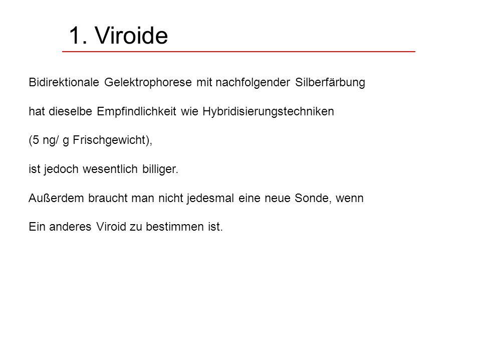1. Viroide Bidirektionale Gelektrophorese mit nachfolgender Silberfärbung. hat dieselbe Empfindlichkeit wie Hybridisierungstechniken.