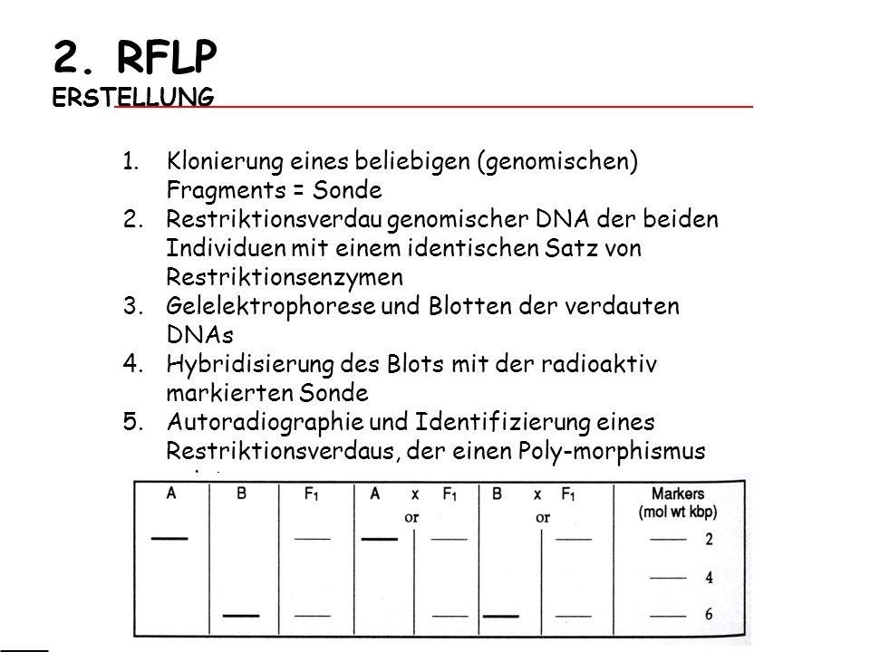2. RFLP ERSTELLUNG Klonierung eines beliebigen (genomischen) Fragments = Sonde.