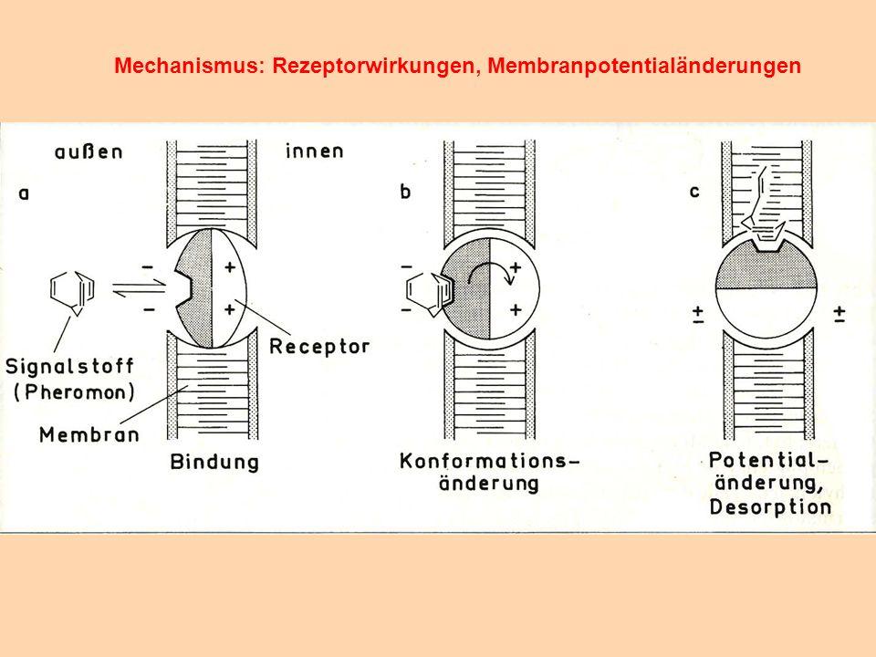 Mechanismus: Rezeptorwirkungen, Membranpotentialänderungen