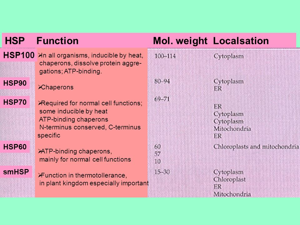HSP Function Mol. weight Localsation