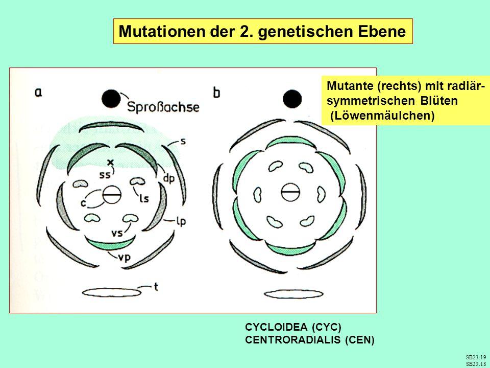 Mutationen der 2. genetischen Ebene