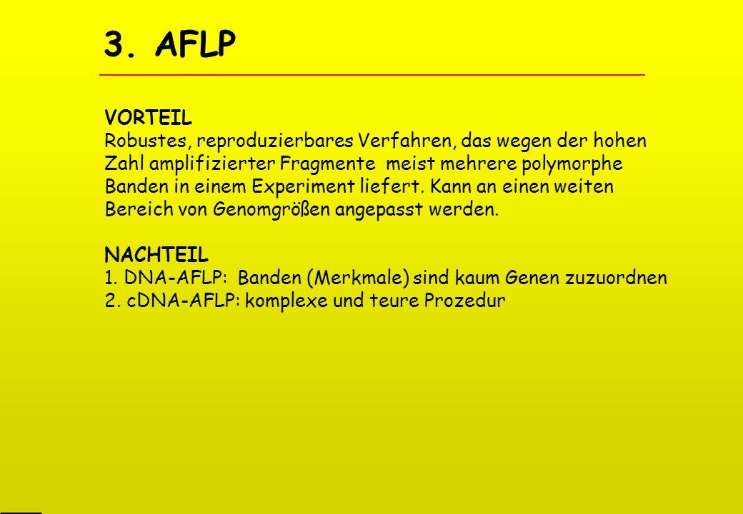 3. AFLP VORTEIL.