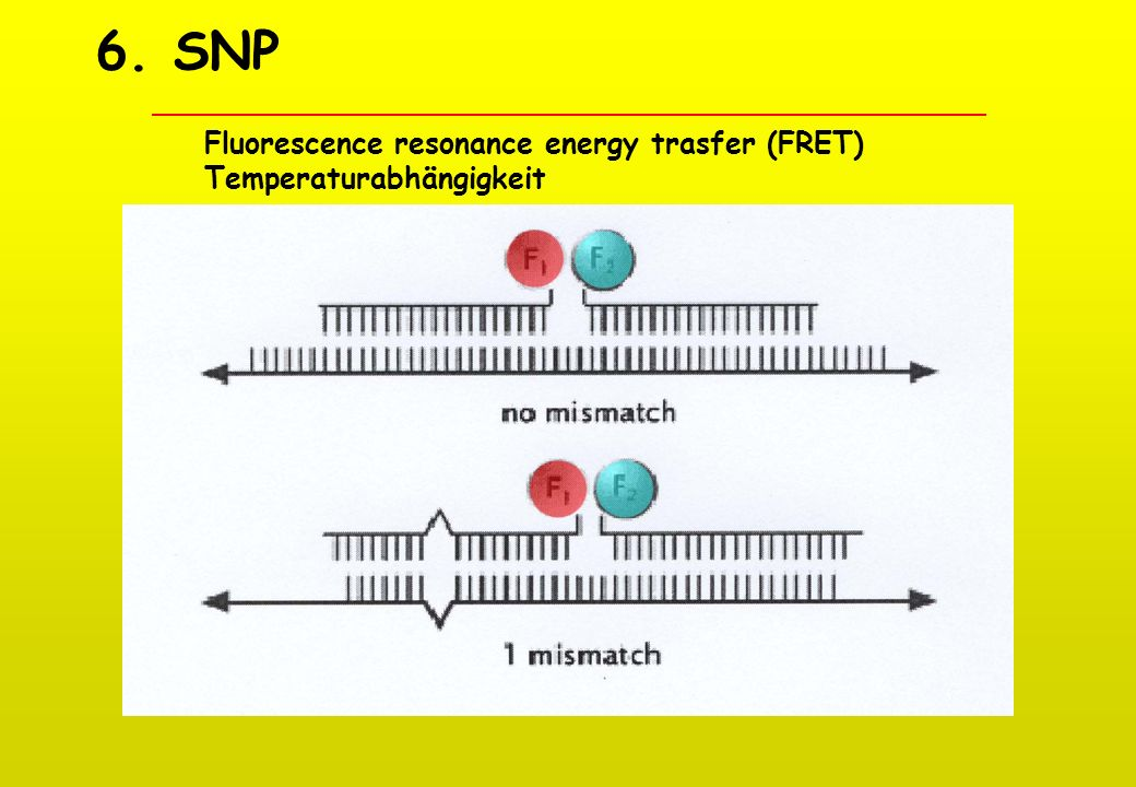 6. SNP Fluorescence resonance energy trasfer (FRET)