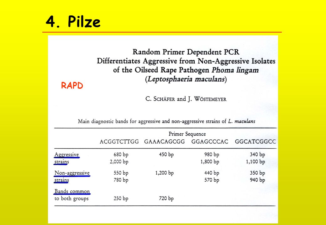 4. Pilze RAPD