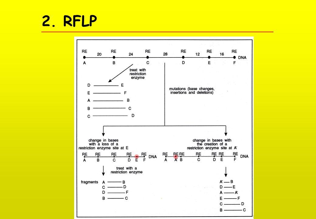 2. RFLP
