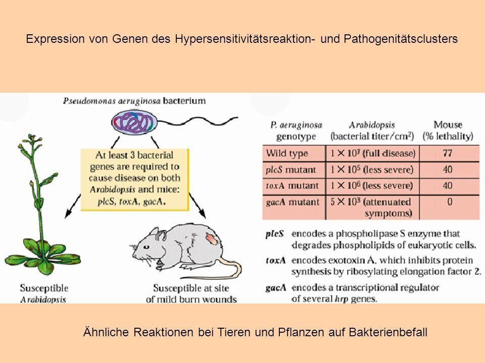 Expression von Genen des Hypersensitivitätsreaktion- und Pathogenitätsclusters