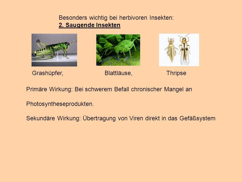 Besonders wichtig bei herbivoren Insekten: