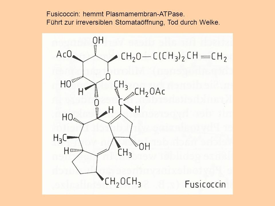Fusicoccin: hemmt Plasmamembran-ATPase.