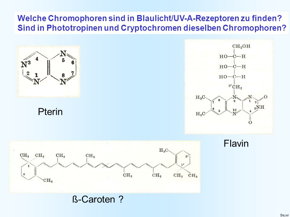 Pterin Flavin ß-Caroten